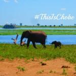 A Chobe Safari… on Twitter