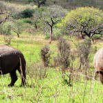 A day in Hluhluwe-Imfolozi Game Reserve
