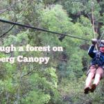 Tarzan and Jane Style, Ziplining in the Drakensberg