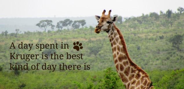 A Kruger Park Day Trip
