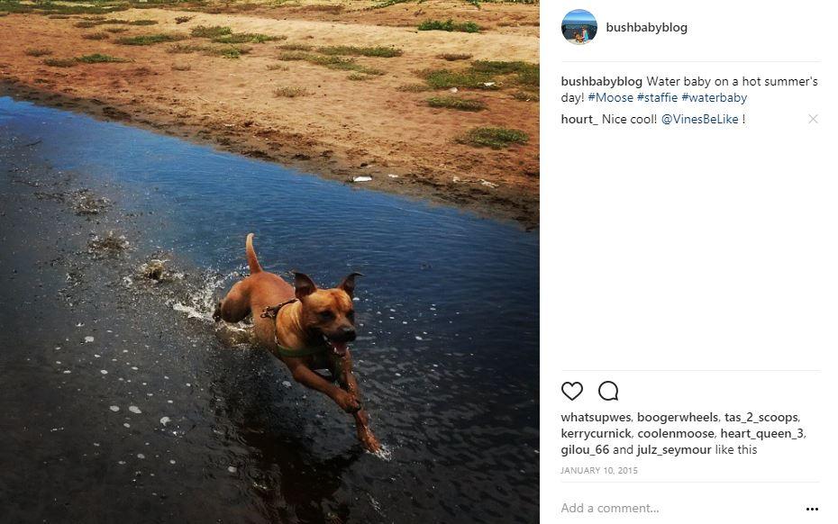 A Dog's life at La Mercy Lagoon