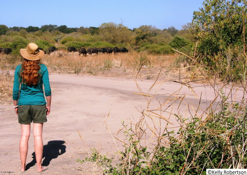 Serondela picnic site Chobe National Park, buffaloes