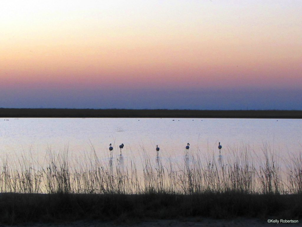 Flamingos at sunset at Nata Bird Sanctuary.