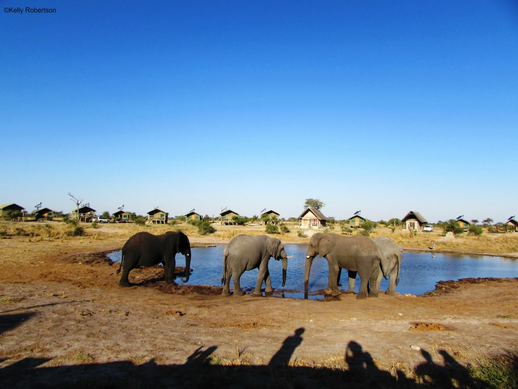Elephant Sands water hole