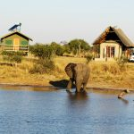BLOG SERIES: A BOTSWANA CAMPING ADVENTURE (PART 2 OF 6)