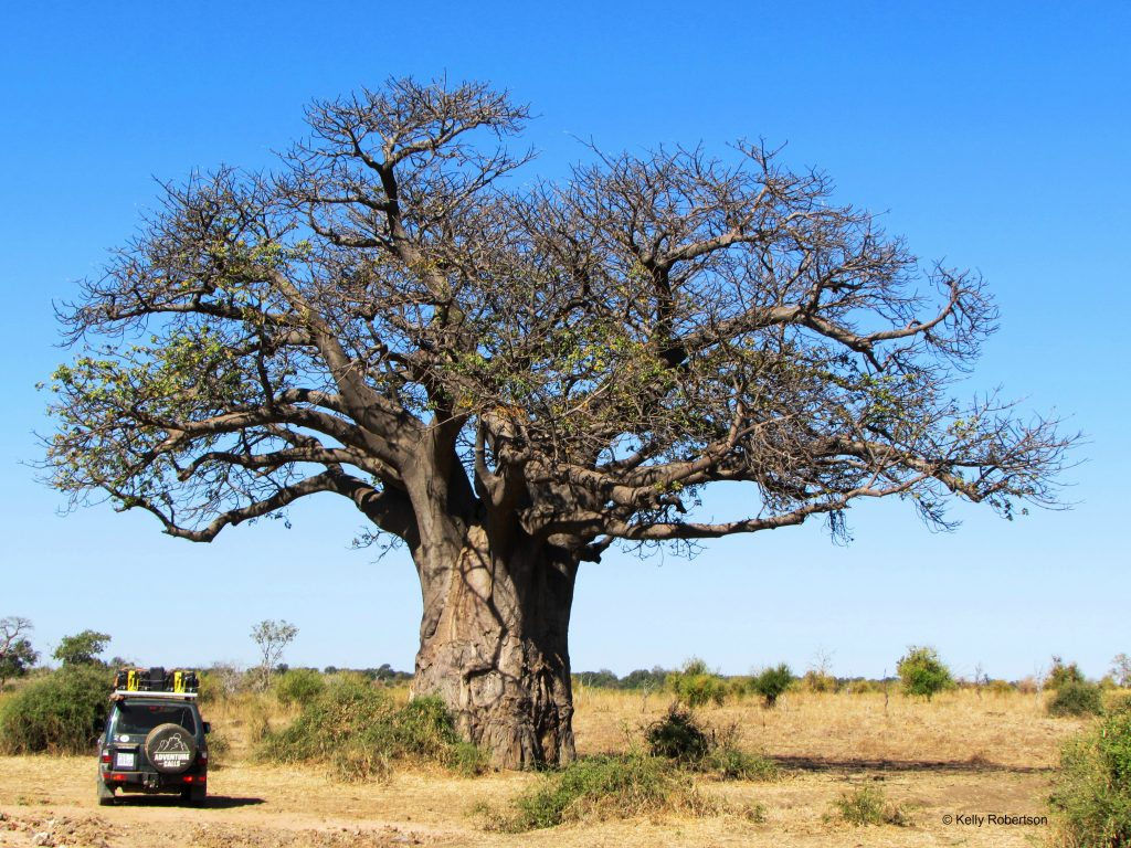Baobabs of Botswana and a Pajero