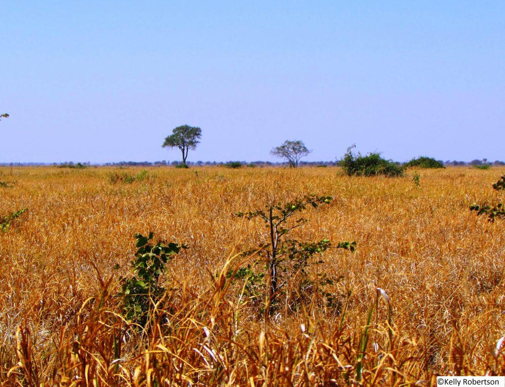 Savuti plains, Botswana