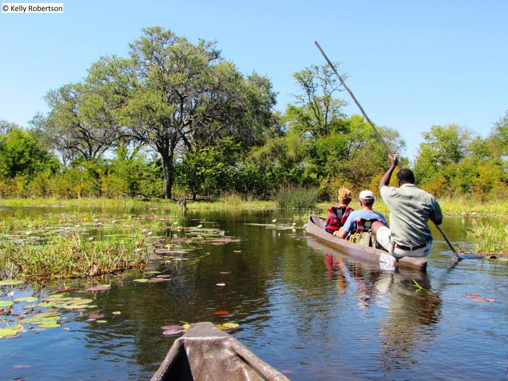 respecting buffalo on a mokoro, Botswana