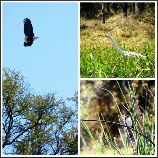Birds on the Okavango Delta