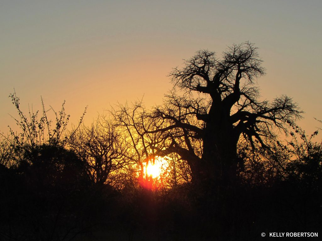 Sunset at Planet Baobab