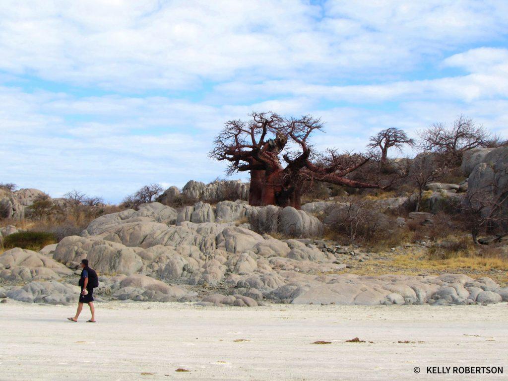 Kubu Island Baobabs